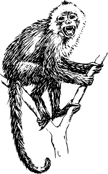 Capuchin clipart #20, Download drawings