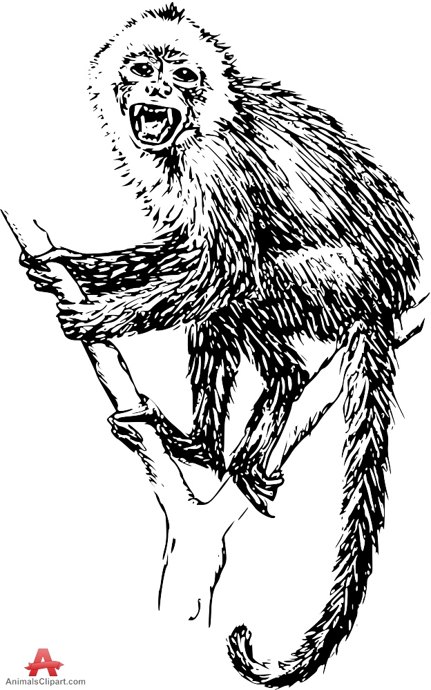 Capuchin clipart #8, Download drawings