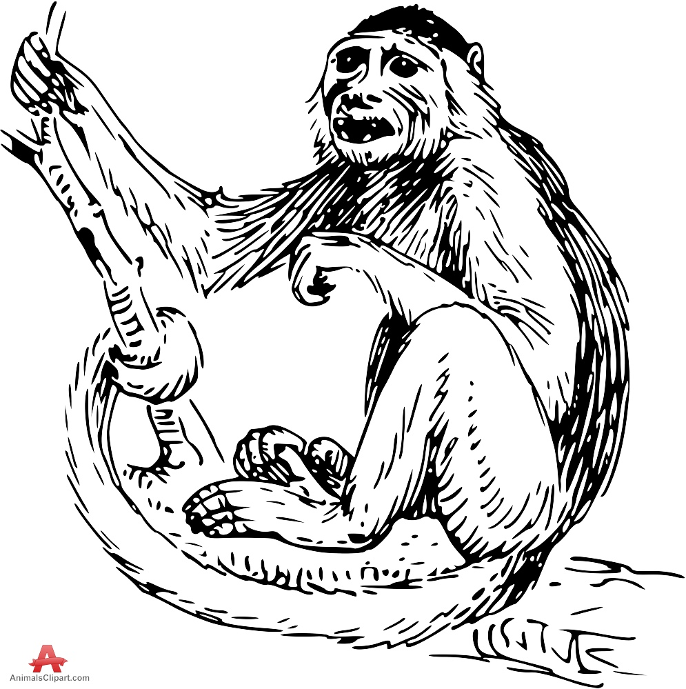 Capuchin clipart #5, Download drawings