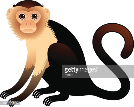 Capuchin clipart #15, Download drawings