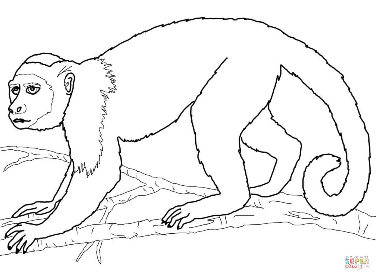 Colobus Monkey  coloring #15, Download drawings
