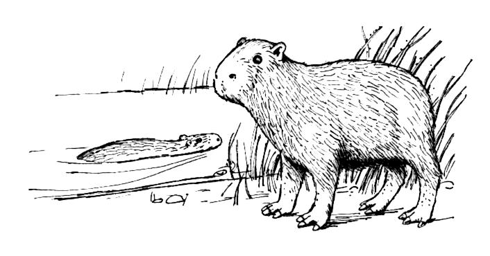 Capybara clipart #11, Download drawings