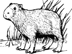 Capybara clipart #4, Download drawings