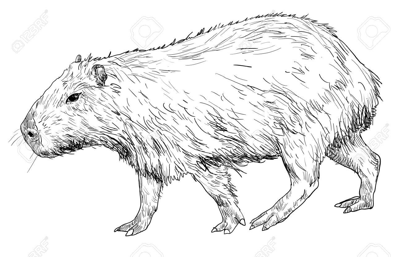 Capybara clipart #6, Download drawings