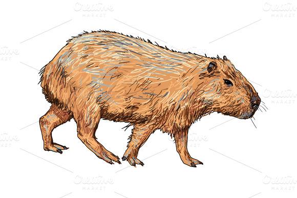 Capybara clipart #14, Download drawings