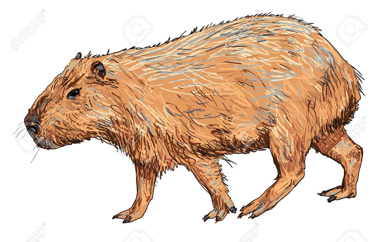 Capybara clipart #13, Download drawings
