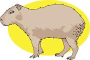 Capybara clipart #18, Download drawings