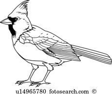 Cardinal clipart #10, Download drawings