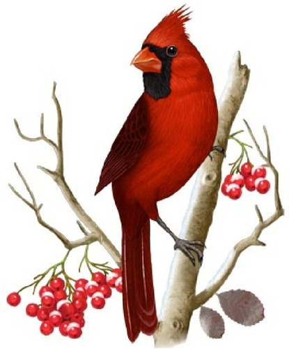 Cardinal clipart #18, Download drawings