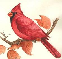 Cardinal clipart #11, Download drawings