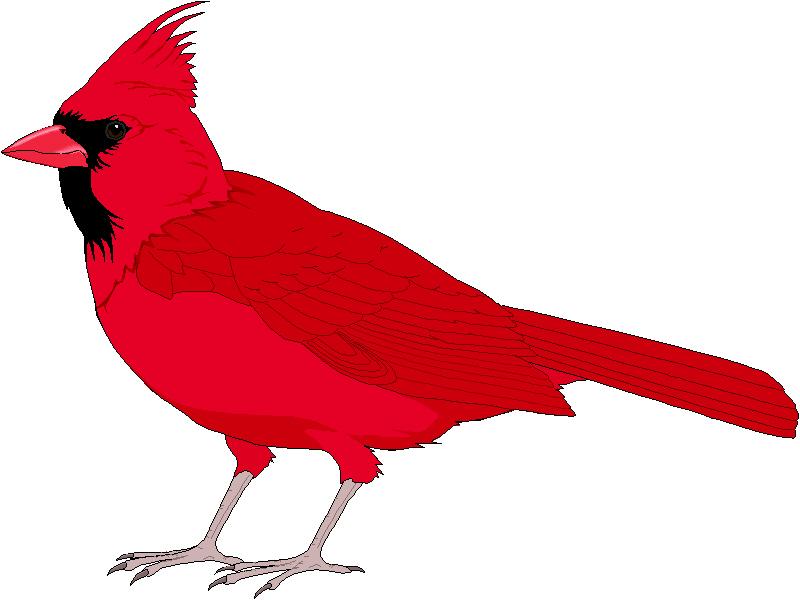 Cardinal clipart #1, Download drawings