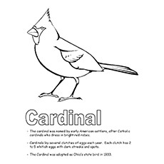 kentucky state bird coloring pages - photo#10