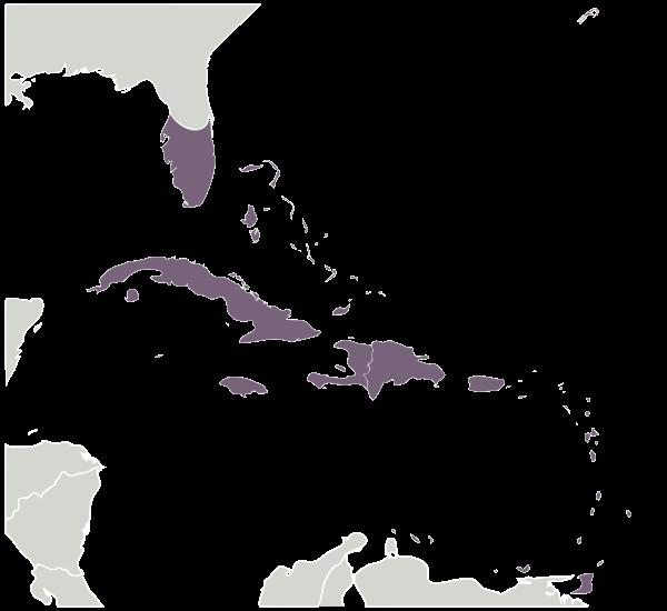 Caribbean svg #19, Download drawings