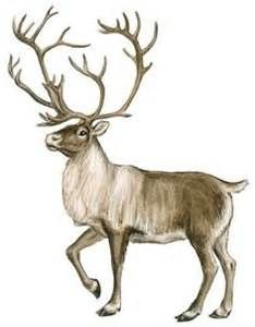 Caribou clipart #6, Download drawings