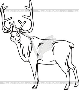 Caribou clipart #3, Download drawings