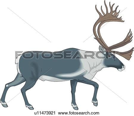 Caribou clipart #16, Download drawings