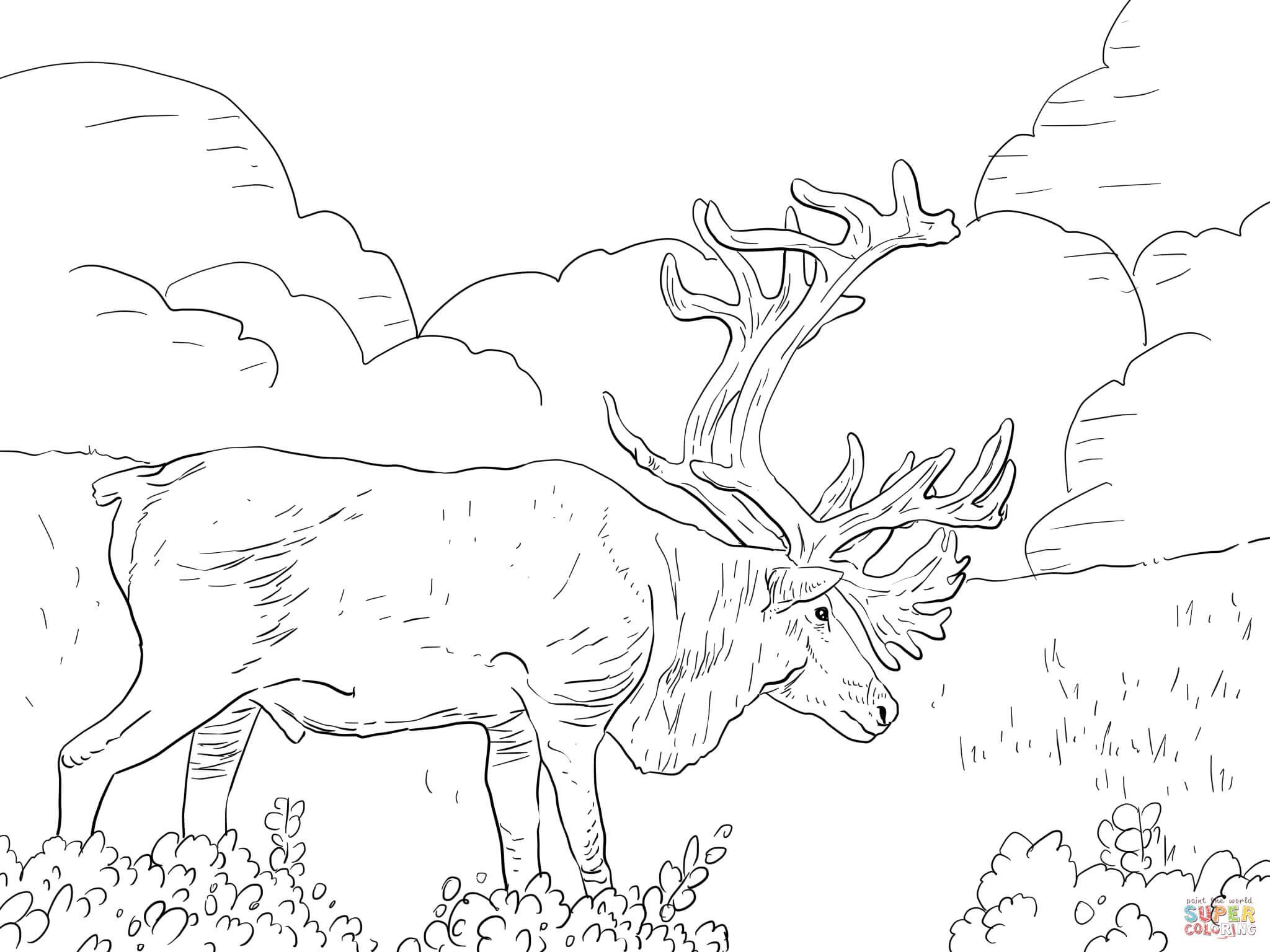 Caribou coloring #9, Download drawings