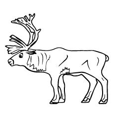 Caribou coloring #6, Download drawings