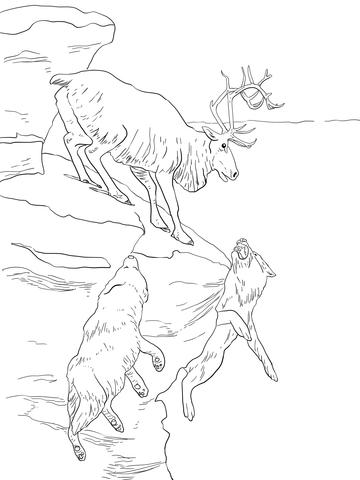 Caribou coloring #3, Download drawings