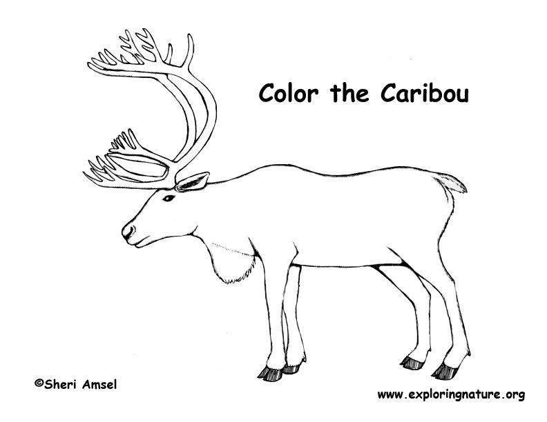 Caribou coloring #17, Download drawings