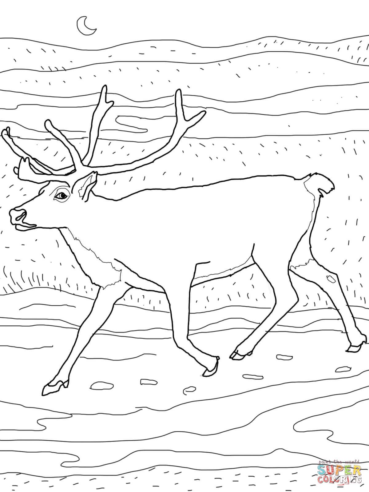 Caribou coloring #7, Download drawings