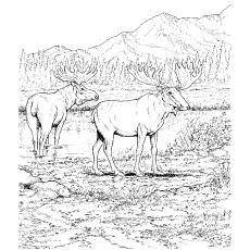 Caribou coloring #10, Download drawings