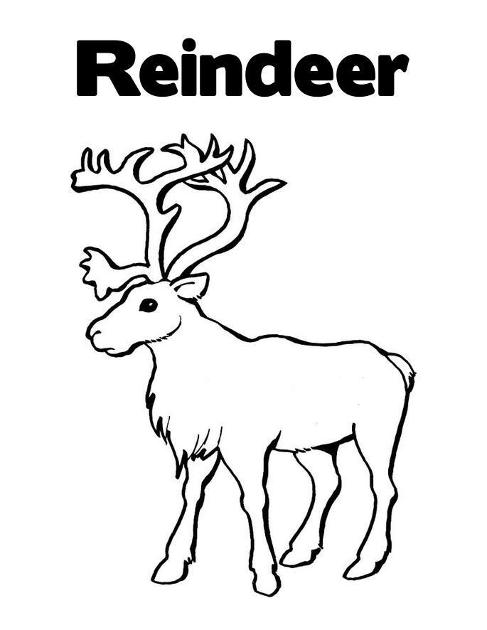 Caribou coloring #14, Download drawings