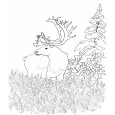 Caribou coloring #1, Download drawings