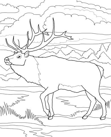 Caribou coloring #8, Download drawings