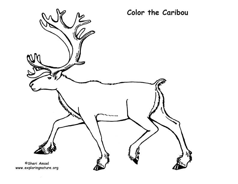 Caribou coloring #20, Download drawings