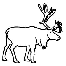 Caribou coloring #13, Download drawings