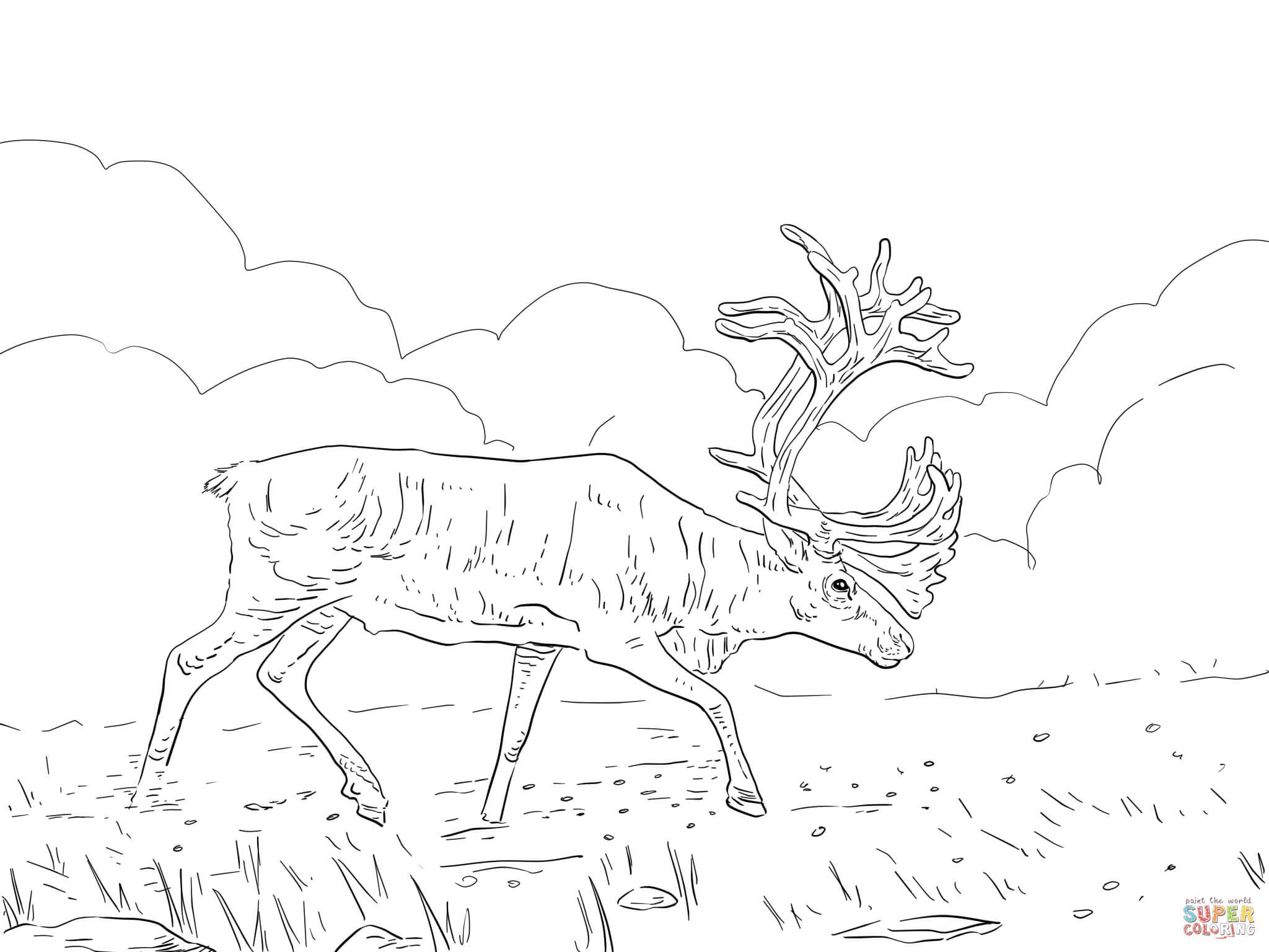 Caribou coloring #11, Download drawings