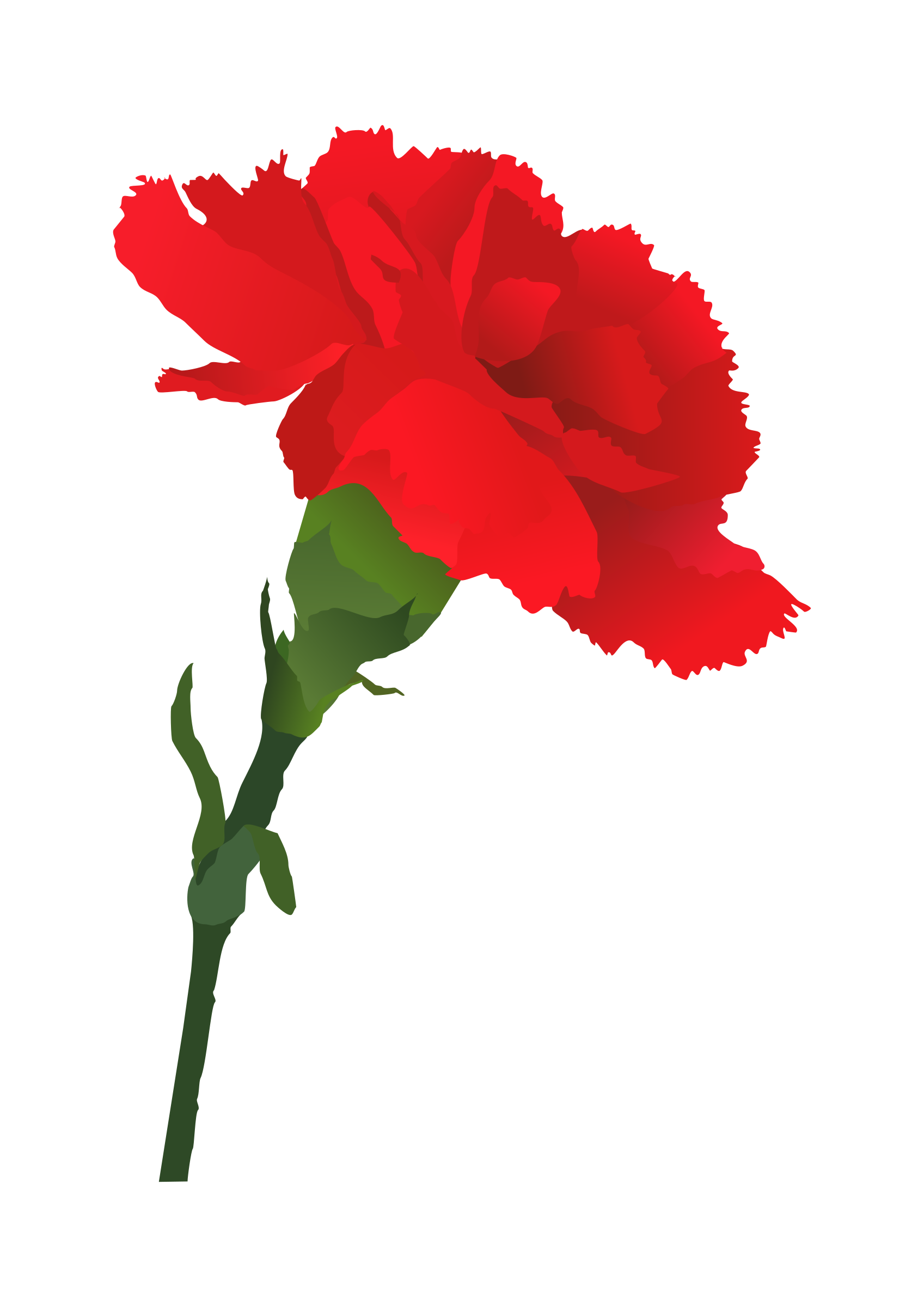 Dianthus clipart #9, Download drawings