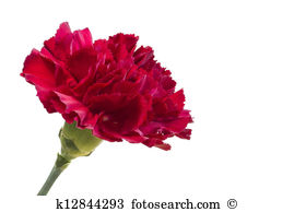 Carnation clipart #3, Download drawings