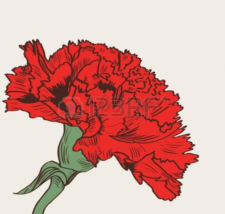 Carnation clipart #7, Download drawings