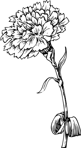 Carnation clipart #15, Download drawings
