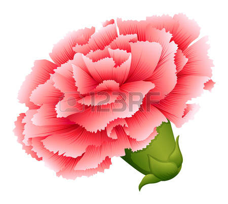 Carnation clipart #2, Download drawings
