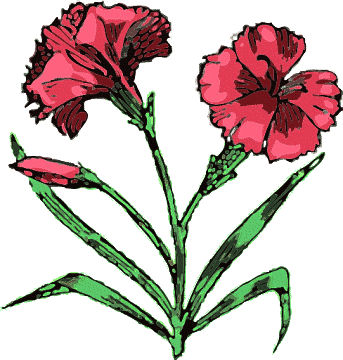 Carnation clipart #18, Download drawings