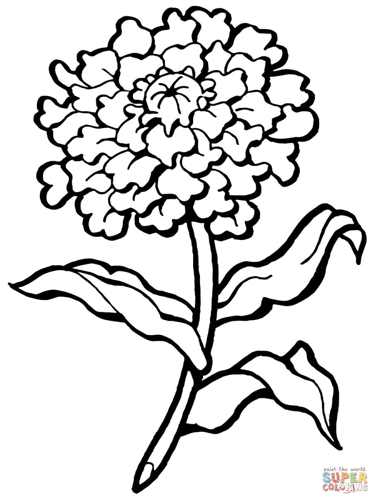 Dianthus coloring #7, Download drawings