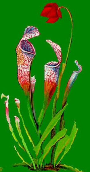 Carnivorous Plant svg #14, Download drawings