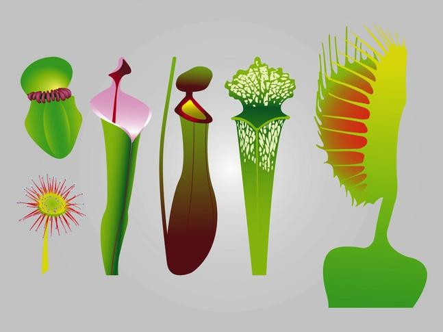 Carnivorous Plant svg #7, Download drawings