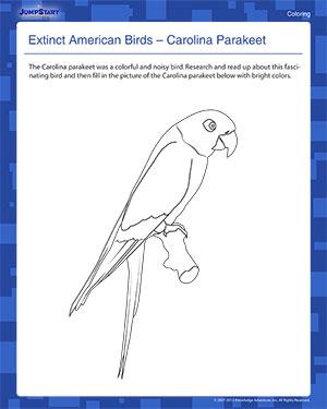 Carolina Parakeet coloring #19, Download drawings