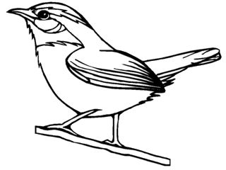 Carolina Parakeet coloring #10, Download drawings
