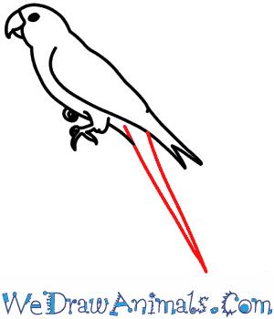 Carolina Parakeet coloring #11, Download drawings