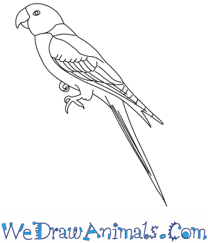 Carolina Parakeet coloring #20, Download drawings