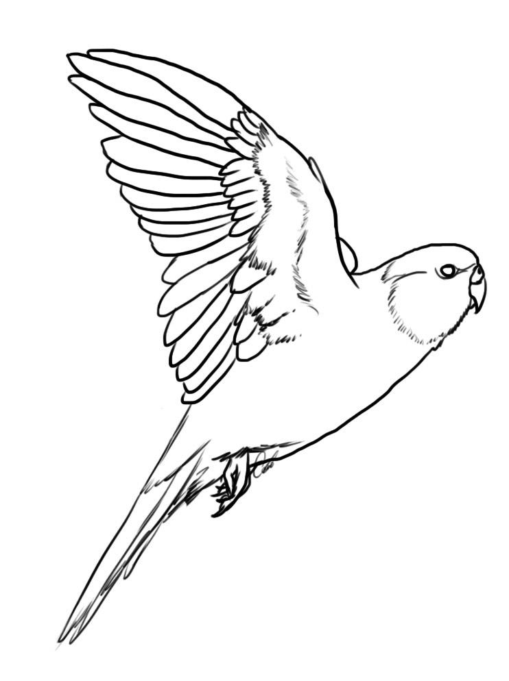 Carolina Parakeet coloring #3, Download drawings