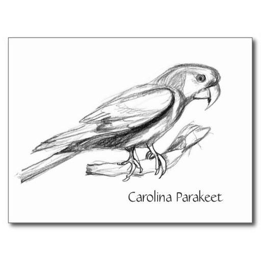 Carolina Parakeet coloring #17, Download drawings
