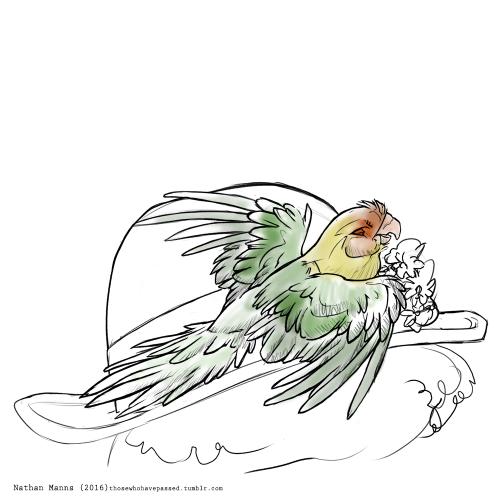 Carolina Parakeet coloring #16, Download drawings