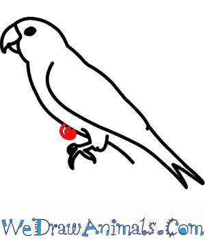 Carolina Parakeet coloring #18, Download drawings