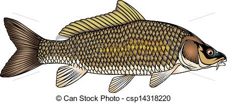Carp clipart #10, Download drawings